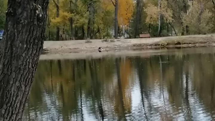 Следователи рассказали, из-за чего умер человек, труп которого нашли утром в Харитоновском парке