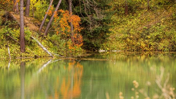 Люди, бурундучки и ворох листьев: взгляните на золотую осень в Сибири — 10 живописных кадров