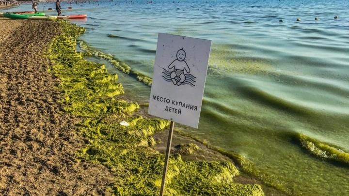 Черное море в Анапе зацвело и стало зеленым. Опасно ли это и как долго будет длиться?