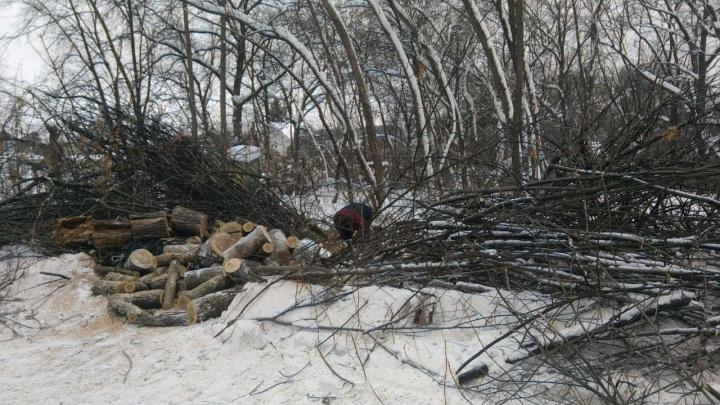 Самарцы заявили о вырубке деревьев в Сорокиных Хуторах