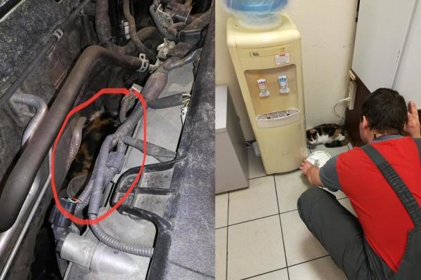 Механики нашли кошку под капотом