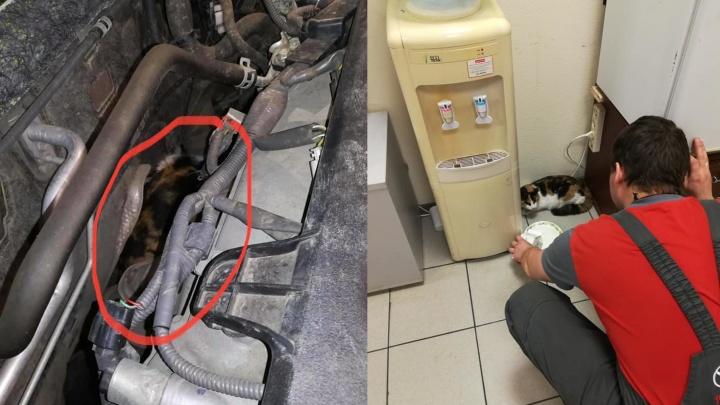 «У вас под капотом кошка»: челябинку, пригнавшую машину на техосмотр, ждал сюрприз