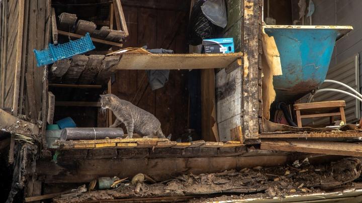 Куда делся «кошкин дом»? В разрушенном здании на Галактионовской жили несколько кошек