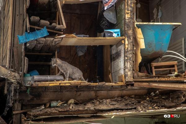 Пушистые обитатели не узнали свой дом после происшествия