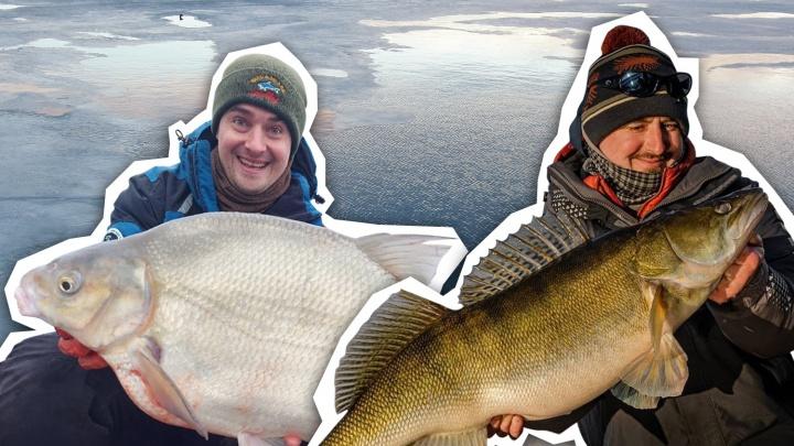 Лещ-переросток и судак размером с ребенка: тюменцы поймали огромных рыб в местных водоемах