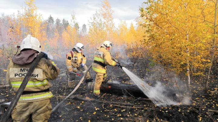 В Тольятти во время пожара сгорело больше 4 гектаров леса
