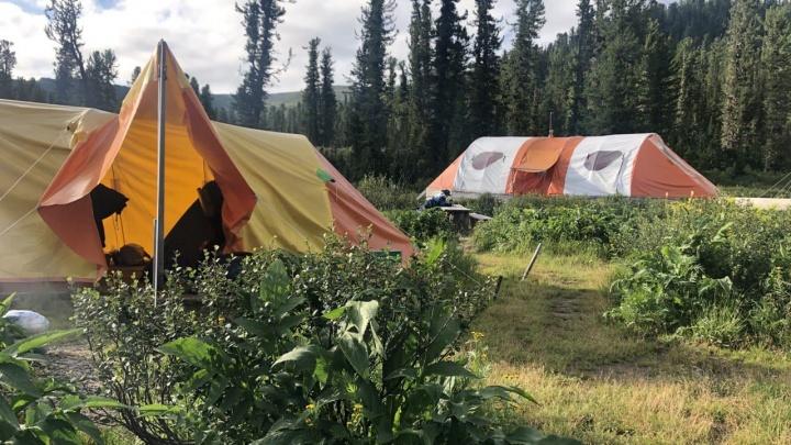 Туристическая группа, на которую напал медведь в «Ергаках», не регистрировалась в МЧС