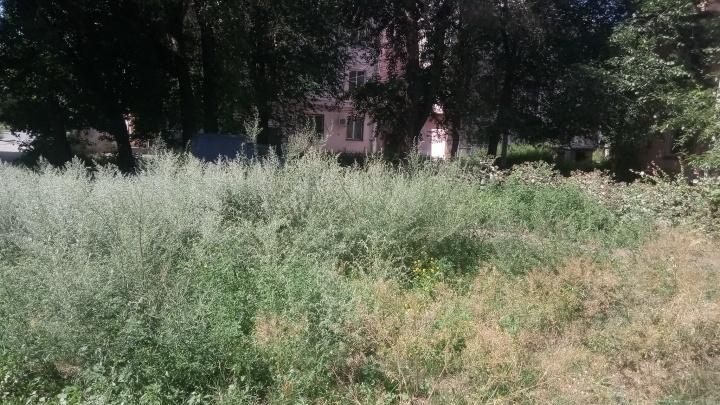 Чиновникам дали неделю на покос травы. Челябинцы показали им самые проблемные дворы и газоны