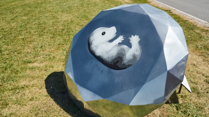 Поморье — бриллиант с тюленем. Так область изобразили на выставке в Санкт-Петербурге