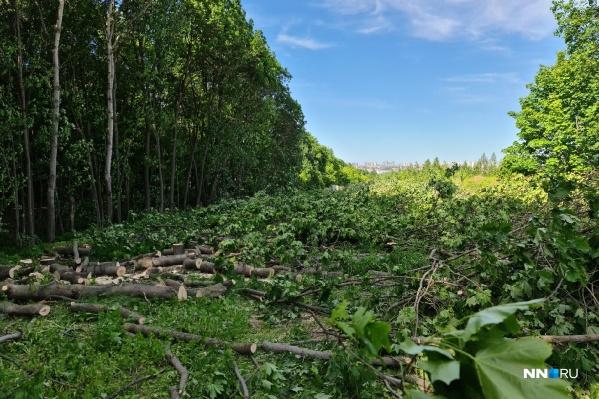 Около улицы Цветочной уже вырублены десятки деревьев