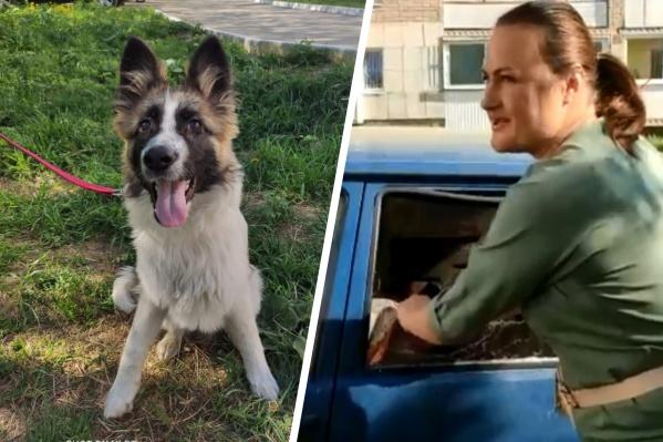 Чтобы освободить пса из машины, зоозащитница решила разбить окна автомобиля