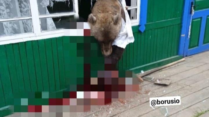 Сожрал рыбу и творог: в Мотыгинском районе медведь разворотил кухню местного жителя