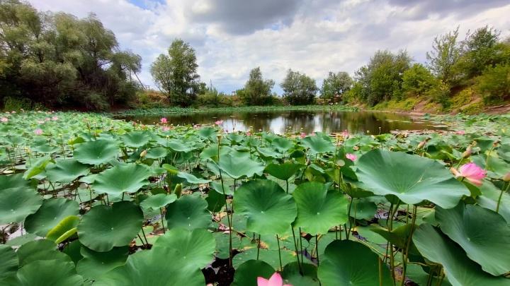 Вновь раскрылись после дождя: смотрим на увядающее «змеиное» озеро под Волгоградом с высоты