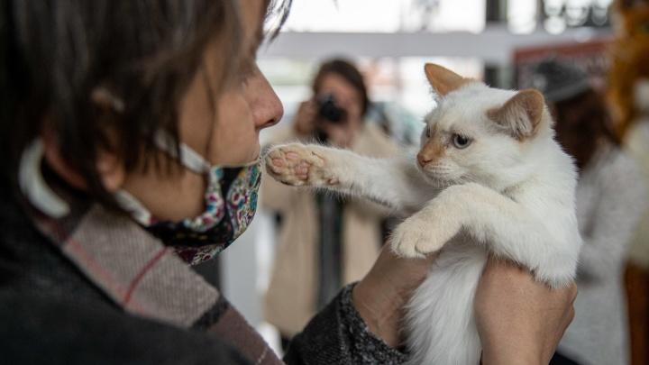 В Новосибирске прошла выставка-раздача бездомных животных — 10 фото котиков, которые ищут свою семью