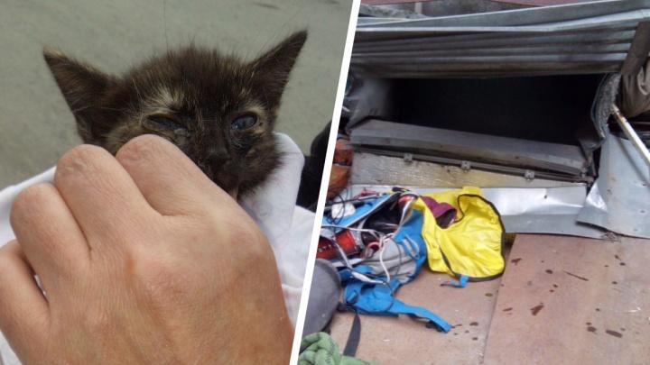 В ковидном госпитале Екатеринбурга спасли котенка, крики которого слышали все пациенты
