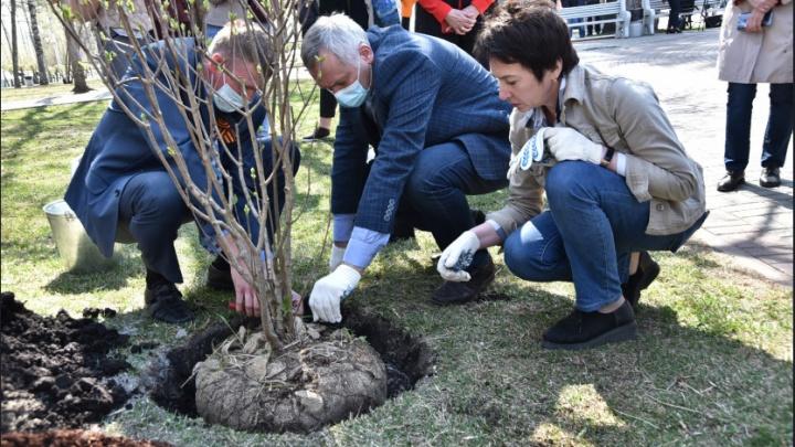 Новосибирцы вместе с губернатором посадили деревья в сквере Авиаторов