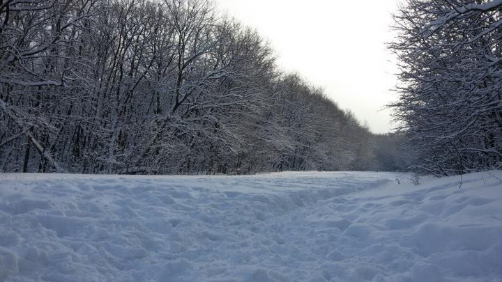 Самарцы выбрали для благоустройства Парк 60-летия Советской власти и «Воронежские озера»