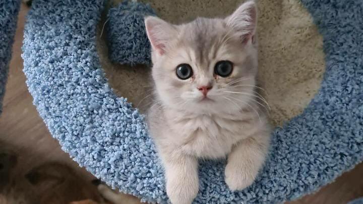 В кризис выросли в два раза: как кошка помогла паре из Екатеринбурга открыть семейный бизнес