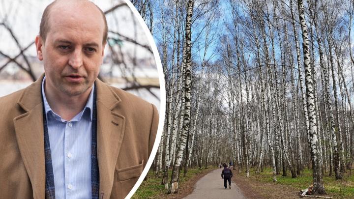 «Устроили охоту на ведьм»: проектировщик реконструкции Павловской рощи ответил на возмущения ярославцев