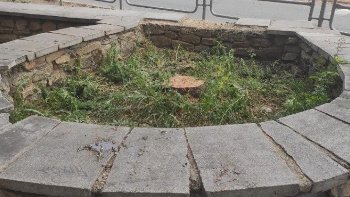 Вырубка даурской лиственницы в центре Челябинска переросла в уголовное дело