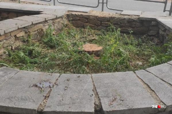 Дерево уничтожили на пересечении проспекта Ленина и улицы Красной