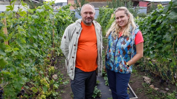 Бизнес на лозе: семья из Казахстана выращивает виноград под Сысертью
