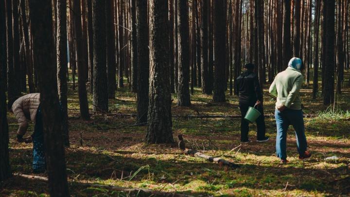 Губернатор снял запрет на посещение тюменских лесов. Теперь можно по грибы да по ягоды