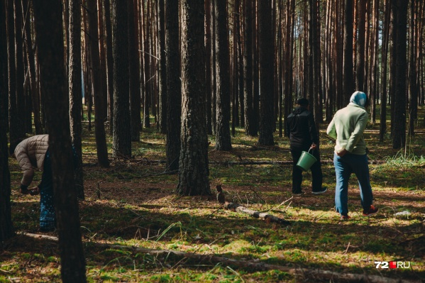 Власти разрешили ходить в лес