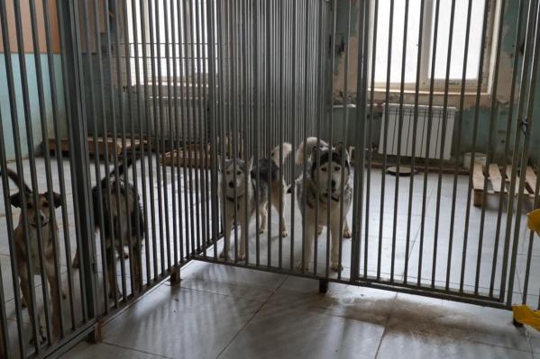 В замерзающем приюте содержатся 1300 собак и кошек<br>