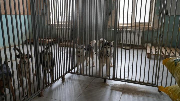 «Нам не приходится выбирать»: в Волгограде приют для животных остался без отопления из-за огромного долга