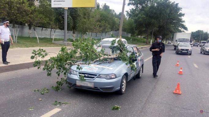 В Волгограде пилят тополя вдоль Второй Продольной магистрали
