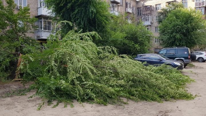 Во дворе в центре Волгограда старое дерево рухнуло на автомобиль