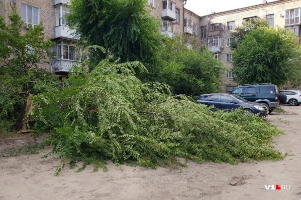 Дерево не выдержало легкого дуновения ветерка