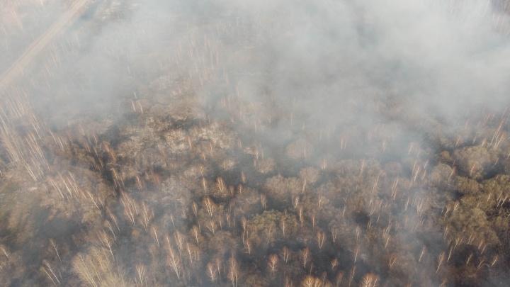 След от огня площадью как три Екатеринбурга — последствия лесных пожаров в Тюменской области