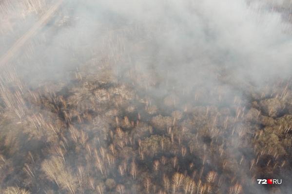 Масштабы лесных пожаров поражают, но власти делают всё возможное, чтобы остановить огонь