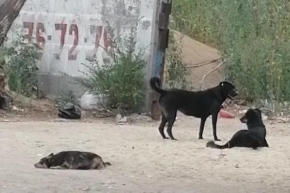 Кинолог крайне не рекомендует прикармливать бездомных животных