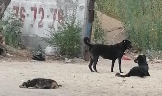 «Не кормить ни в коем случае»: профессиональный кинолог предложил решение проблемы бродячих собак в Волгограде