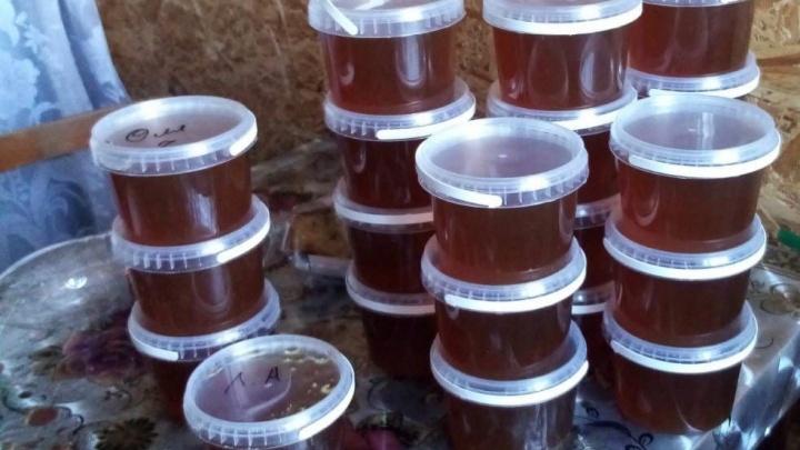 Тюменские пасечники собрали в пять раз меньше меда, чем годом ранее, — в чем проблема