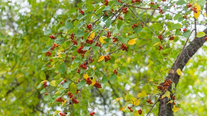 В начале сентября в Прикамье будет теплая и дождливая погода