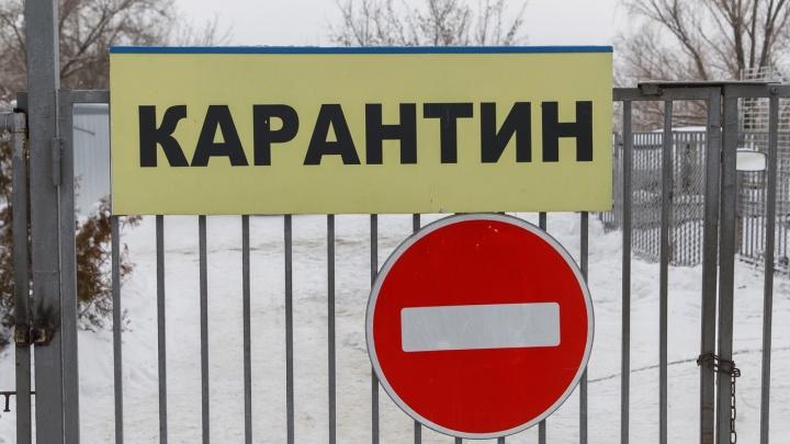 В Волгоградской области райотдел полиции иавтозаправка признаны очагами бешенства