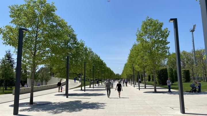 Николаевский бульвар в Краснодаре победил в голосовании среди зеленых зон для благоустройства
