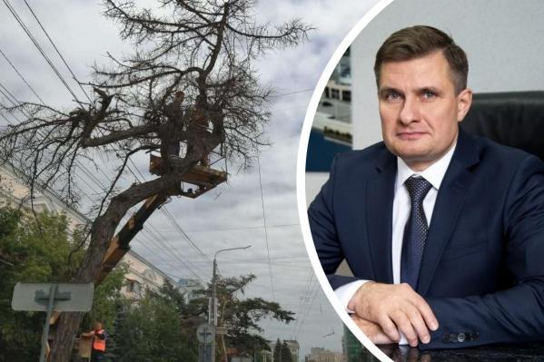 Дерево спилили 1 июня, и Максим Куляшов ранее заверял мэра, что был не в курсе планов по сносу лиственницы