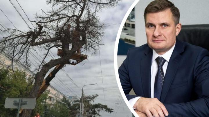 Вице-мэр Челябинска объяснил, как принимались решения по сносу вековой лиственницы в центре города
