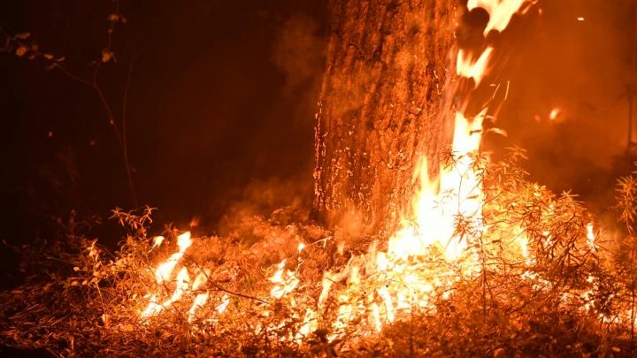 Под Екатеринбургом горит лес: огненный фоторепортаж из сердца пожара