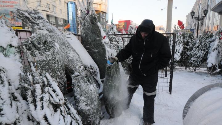 Пустят на опилки. В Екатеринбурге впервые откроются пункты приема новогодних елок