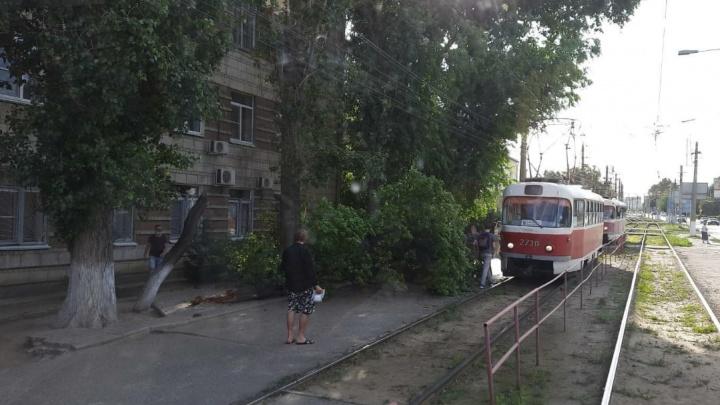 «Перегородило остановку и тротуар»: в центре Волгограда дерево рухнуло на трамвай