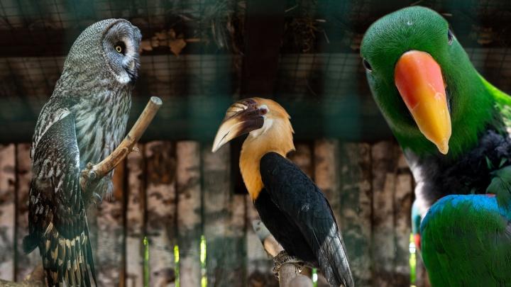 Ни разу не были в «Малинках»? Показываем, что есть в живописном парке птиц в Ростовской области