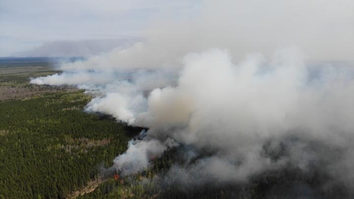 Глава Рослесхоза остался недоволен действиями тюменских властей при тушении лесных пожаров