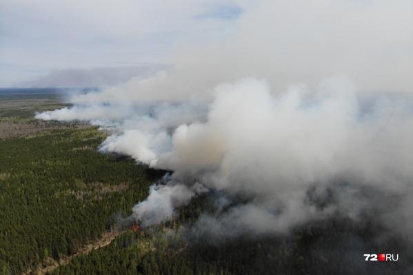 Этой осенью Тюменскую область поглотили лесные пожары нереальных масштабов: такого не было больше десяти лет