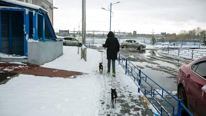 На фельдшера скорой помощи в «Белых росах» спустили бойцовскую собаку. Медик приехал к ребенку